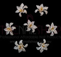 3D Flexible Flowers for Nail Art (20PCS) - White & Yellow Long Leafs