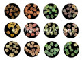 Square Swirl Shell Shapes Nail Art Kit (12 Pots) (SQSWRL)