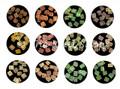 Square Swirl Shell Shapes Nail Art Kit (12 Pots) (SQSWRL)