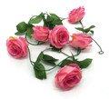6' Rose Garland, Pink - Pack of 12 (CLA-20160219P)