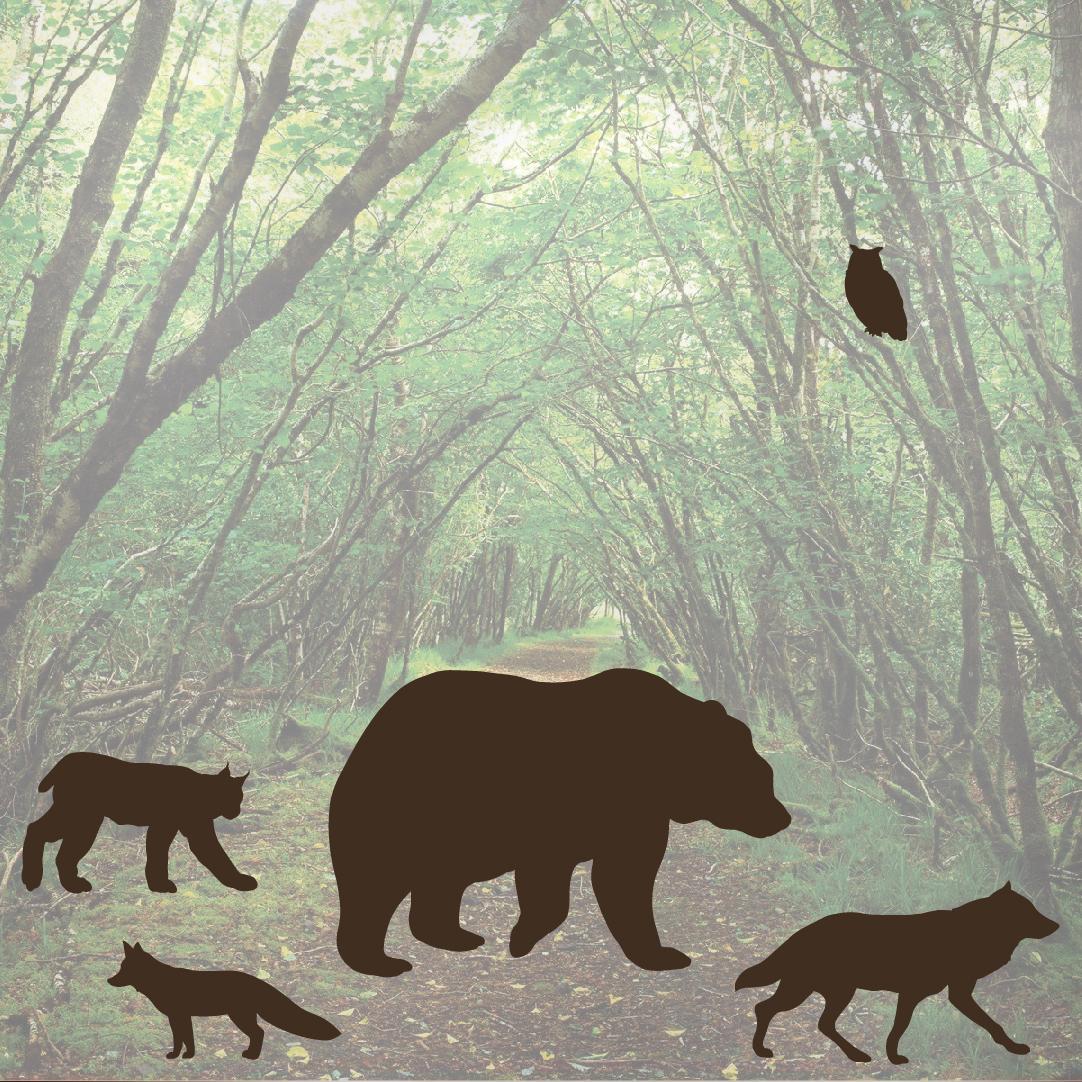 Forest Predator Woods Animal Wall Decal Set Bear Fox Wolf