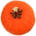 ing-pumpkinseed.jpg