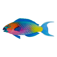 Parrot Fish (patio safe) OS145