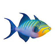 Triggerfish (patio safe) OS146