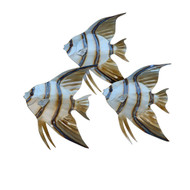 Angelfish School of 3 Metal Wall Art CO151