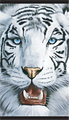 White Tiger Jumbo Beach Towel (40x70)