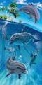 Island Dolphins Beach Towel (30x60)