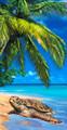 Island Turtle Velour Towel