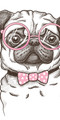 Pug with Glasses Velour Beach Towel