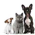 Category:  Pet Supplements
