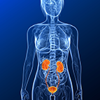 Health Concern:  Kidney & Urinary