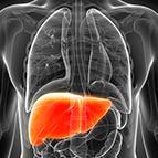 Health Concern:  Liver Support