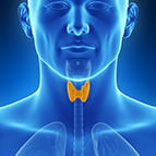 Health Concern:  Thyroid Support