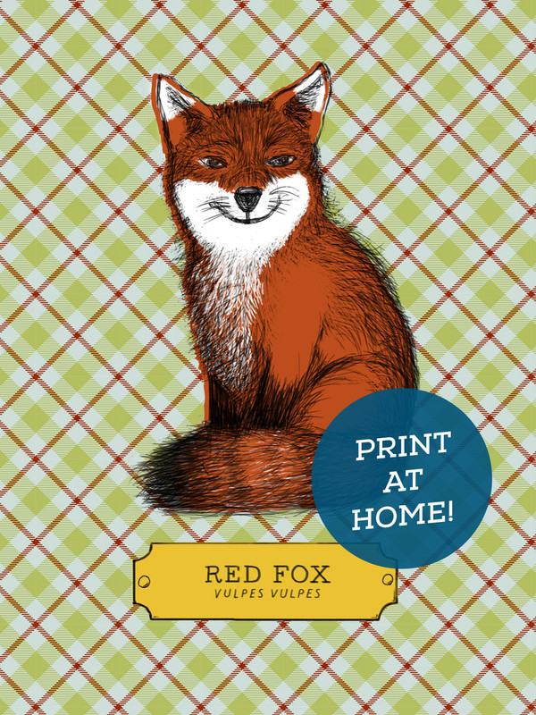 Illustrated Fox Printable