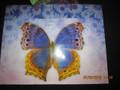 Blue/Purple Butterfly Gift Bag
