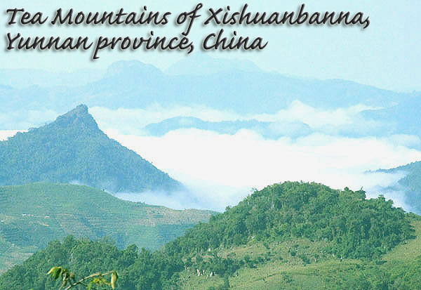ancient-tea-mountains2.jpg