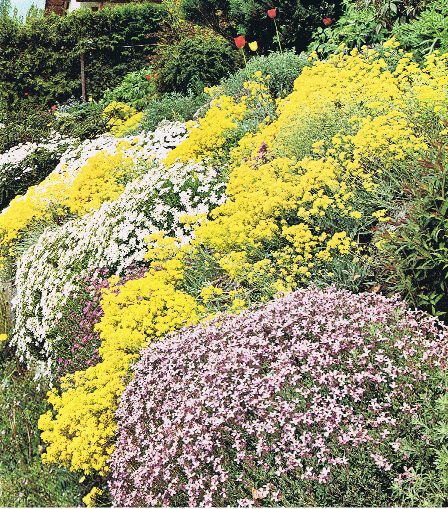 Groundcover Perennial Plants For Interest Texture And Soil Erosion