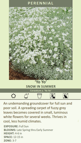'Yo Yo' SNOW IN SUMMER Cerastium t. 'Yo Yo' An undemanding groundcover for full sun and poor soil. A spreading carpet of fuzzy grey leaves becomes covered in small, luminous white flowers for several weeks. Thrives in cool, less humid climates.   EXPOSURE: Full Sun BLOOMS: Late Spring thru Early Summer HEIGHT: 4-6 in SPACE: 12-15 in ZONE: 3-7