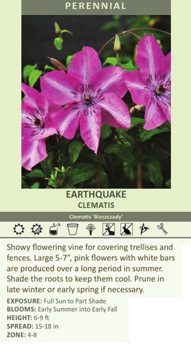 EARTHQUAKE CLEMATIS Clematis 'Bieszczady' Showy flowering vine for covering trellises a?????????????????????????????????, pink flowers with white bars are produced over a long period in summer. Shade the roots to keep them cool. Prune in late winter or early spring if necessary. EXPOSURE: Full Sun to Part Shade BLOOMS: Early Summer into Early Fall HEIGHT: 6-9 ft SPREAD: 15-18 in ZONE: 4-8