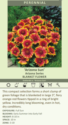 Arizona Sun' Arizona Series BLANKET FLOWER Gaillardia a. 'Arizona Sun' This compact selection forms a short clump of green foliage that is blanketed in large 3 inch?????????????????????????????????????????, fiery orange-red flowers tipped in a ring of bright yellow. Incredibly long blooming, even in hot, dry conditions. EXPOSURE: Full Sun BLOOMS: Early Summer into Early Fall HEIGHT: 8-10 in SPACE: 10 in ZONE: 3-10