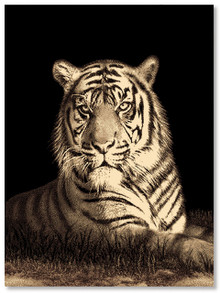 Picture Tiger Rug