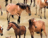 Greener Pastures - Tan Horses Allover by Jennifer Pugh from Wilmington Prints