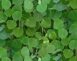 Landscape - Green Leaves from Elizabeth's Studio