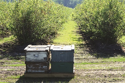 tbf-view-of-field-bees-zomer.jpg