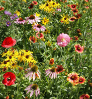 The Currant Farm Honey Bee and Pollinator Wildflower Seed Mix - 1 lb