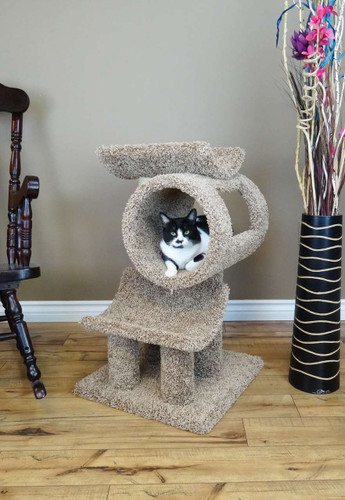 New Cat Condos Cat Gym