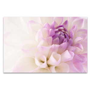 Dahlia Closeup Canvas Art Print