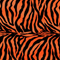 Zebra Orange and black