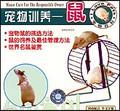 宠物训养—鼠