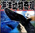 海洋动物奇观