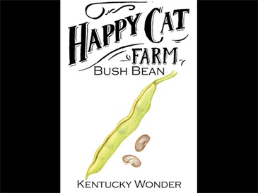 Kentucky Wonder Bush Bean
