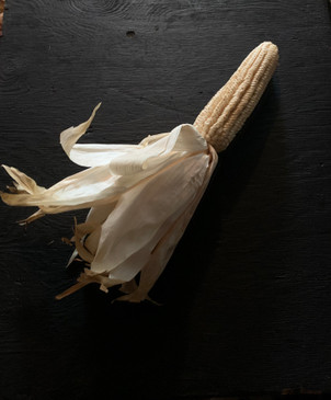 Iroquois Tooth Corn Seed