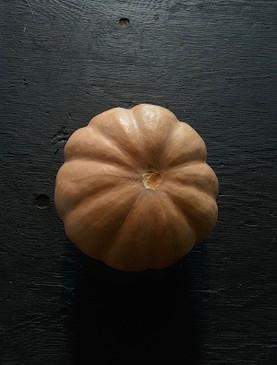 Seminole Squash Seed