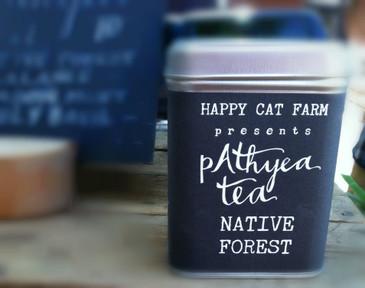 Native Forest pAthyea Tea
