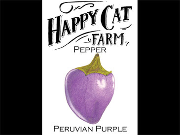 Peruvian Purple Pepper