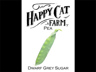 Dwarf Grey Sugar Pea