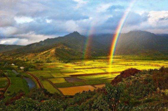 kauai-locations-hanalei-taro.jpg