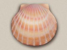 Sand Deep Water Shell Urn