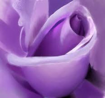 Lavender Rose Lotion