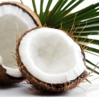 Shea Coconut Lotion