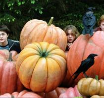 Hagrid's Pumpkin Lotion