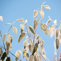 Eucalyptus & Sweet Mint Cream Pot