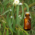 Eucalyptus Oil - 1/2 Ounce