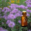 Bergamot Oil - 1/2 Ounce