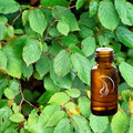 Birch Oil - 1/2 Ounce