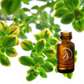 Thyme Oil - 1/2 Ounce